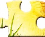 Puzzle Blumen3